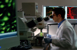 Researcher works in the laboratory
