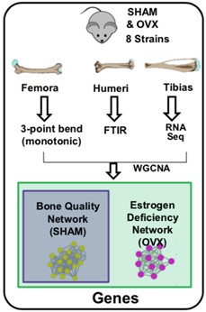 Bone Quality Matrix Diagram
