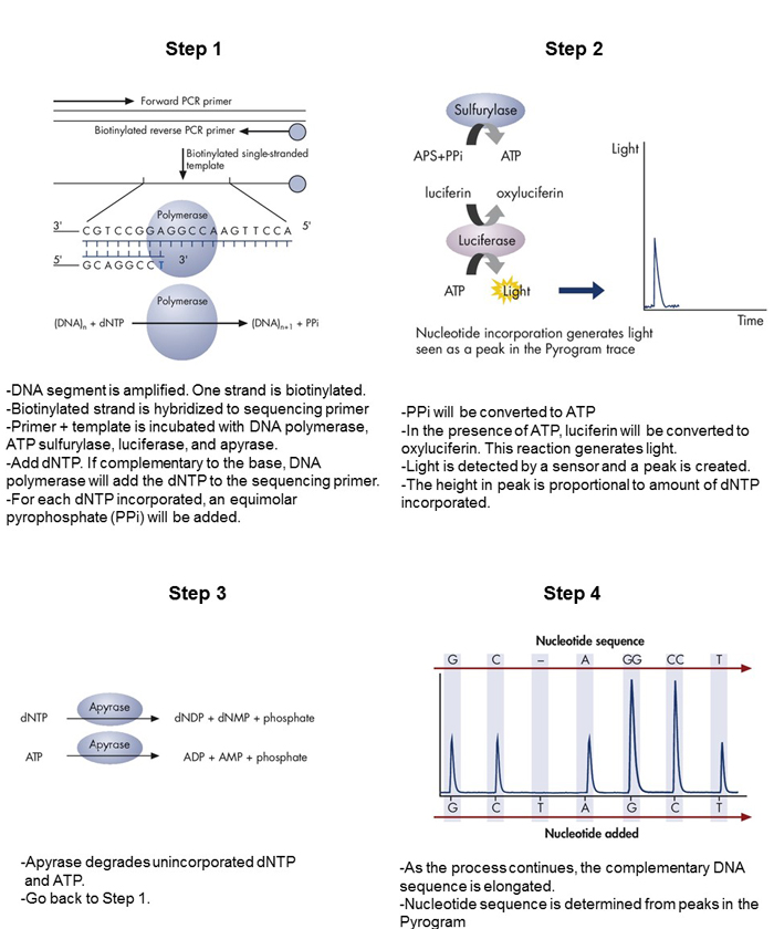 Pyrosequencing 1