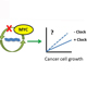 Tumor suppression by the molecular clock