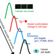 Developing Zinc Metallochaperones as Mutant p53 targeted Anti-Cancer Drugs