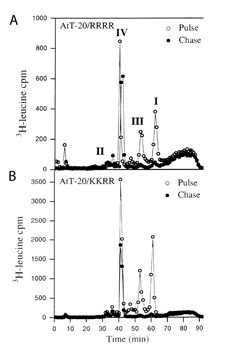 Plot showing pulse-chase experiment with propeptide