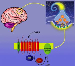 Molecular Basis of Synaptic Transmission