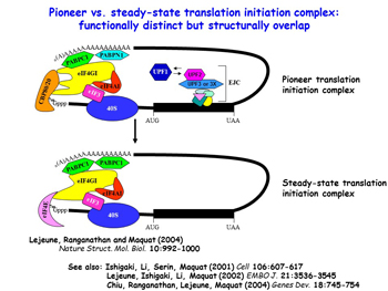 Illustration of Pioneet Translation Complex