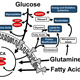 Viral Mechanisms of Metabolic Reprogramming