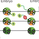 Epigenetic Regulation of Zebrafish Development