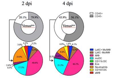 Pie charts to show reverse genetics and flu virus