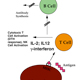 Transfusion immunomodulation
