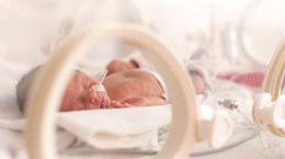 Photo of a baby in an incubator