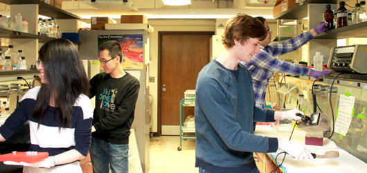 Group of students testing samples in a lab
