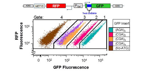 RFP fluorescence test condons