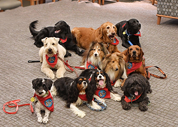A pack photo of the 2019 Friends of Strong therapy dogs.
