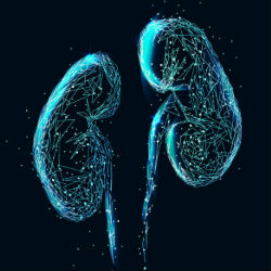 UR CTSI-Supported Study Aims to Predict, Prevent Acute Kidney Injury