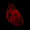 "Study: A ""Slick"" Gene Helps Protect the Heart"