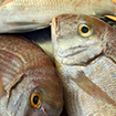 Hair Strands Might Predict Mercury Toxicity