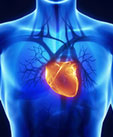 New Drug Improves Rare Heart Disorder, But Could Tackle Common Heart Problems, Too