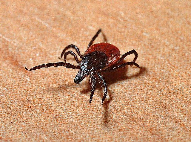 Lyme Disease: Prevention and Symptoms