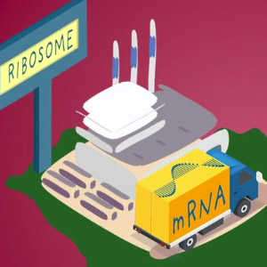Part III: The Power and Promise of RNA
