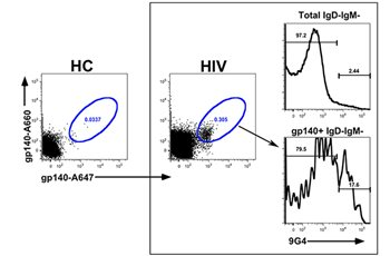 Induction of Protective B Cell Responses to Human Immunodeficiency Virus