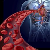 Platelets flowing through blood vessel to heart