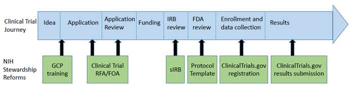 NIH clinical trial timeline