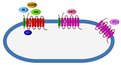 Receptors for the calcitonin family of neuropeptides