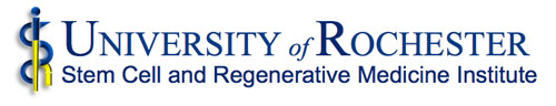 Stem Cell and Regenerative Medicine Institute Banner