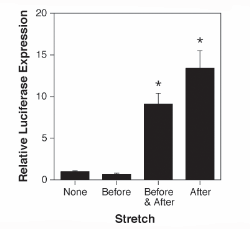 Graph of stretch increases