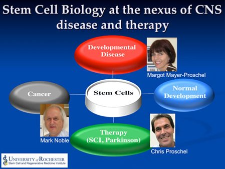 Stem Cell Biology Research Opportunities