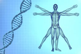 Vitruvian man with DNA helix
