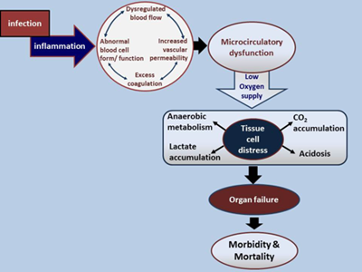 Microcirculatory dysfunction in sepsis