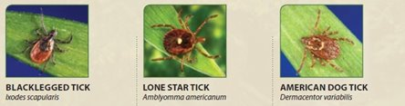 three types of ticks