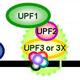 Mechanisms of Nonsense-Mediated mRNA Decay (NMD)