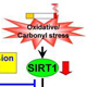 Role of Sirtuin in Regulation of Cigarette Smoke-induced Lung Inflammation and Injury