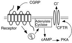 cystic fibrosis transmembrane conductance regulator